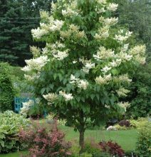 How to plant large or specimen trees